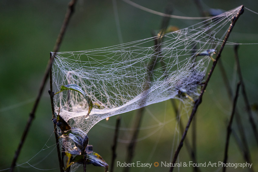 Spiderweb dew